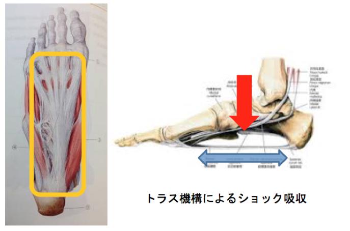足底腱膜炎とは